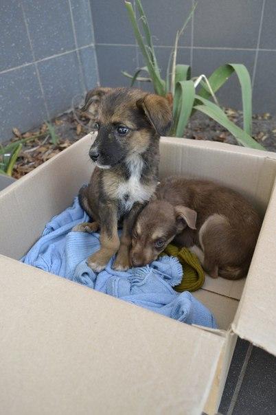 Заявка на размещение животного в базе city-animals.org