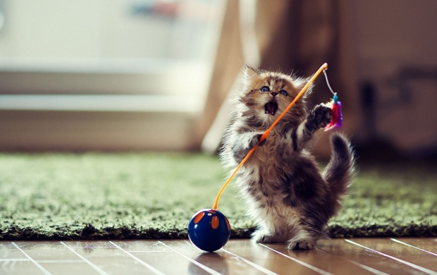 Просмотр темы - Интернет - котики