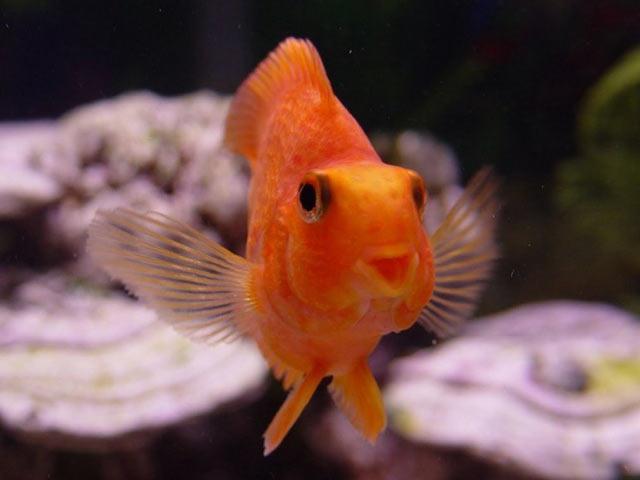 Скачать бесплатно фото с рыбками