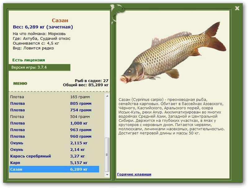 на что лучше клюет рыба в сентябре