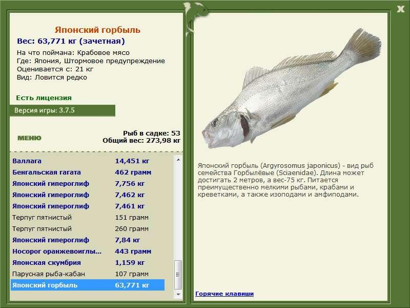 кабанье семейство на рыбалке