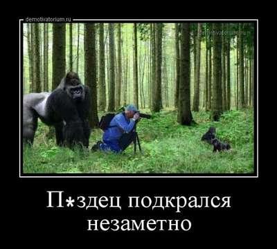 18+ - Отдых в Абхазии - отзывы, советы, рекомендации: http://abhazia-stranadushi.ru/viewtopic.php?f=53&t=24