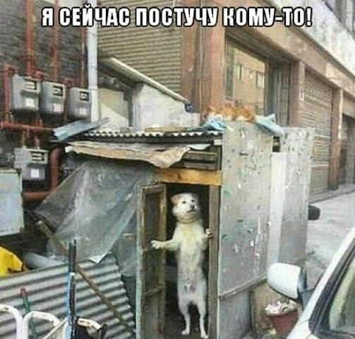 http://forumimage.ru/uploads/20141210/141821559357117828.jpg