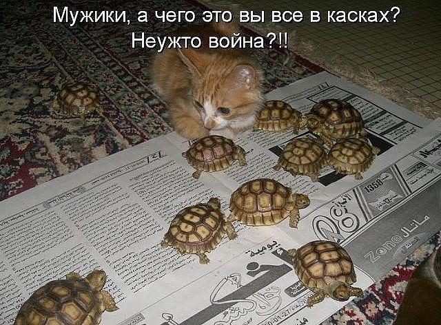 http://forumimage.ru/uploads/20141210/141821584586963631.jpg