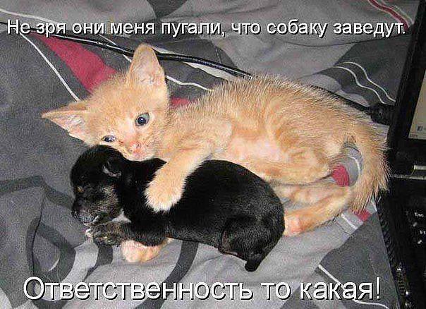 http://forumimage.ru/uploads/20141210/141821590857807658.jpg