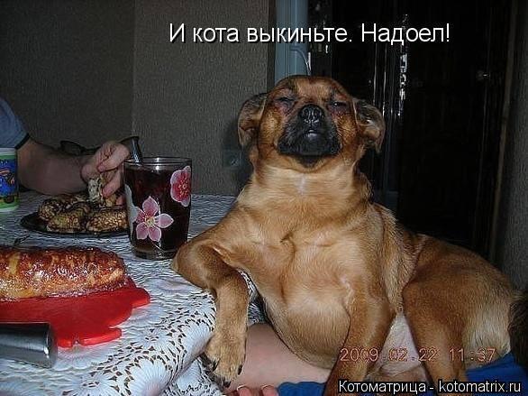 http://forumimage.ru/uploads/20141212/141838465444837583.jpg