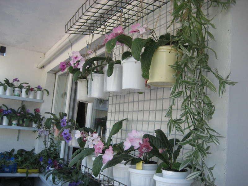 Балконы и лоджии, оборудованные для выращивания растений - с.