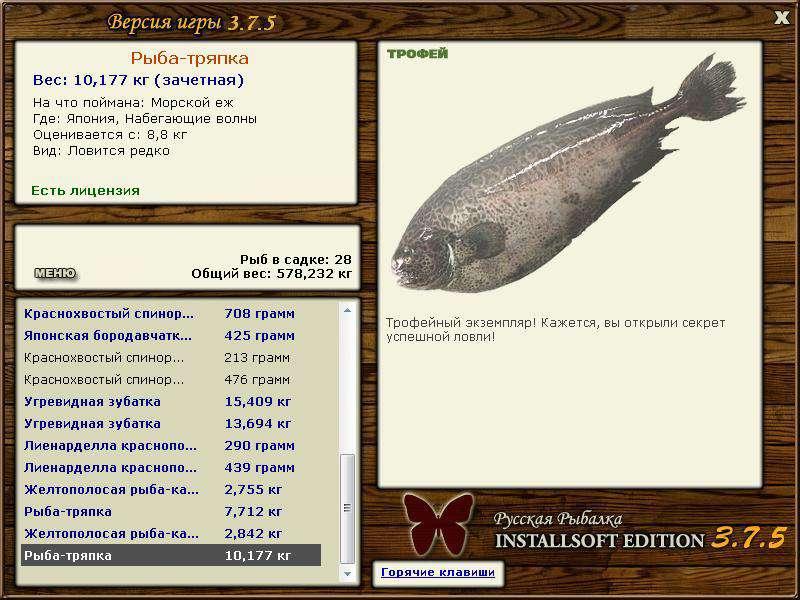 рыба клюет на кусочки рыбы