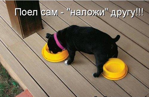 http://forumimage.ru/uploads/20150125/142218416851702075.jpg