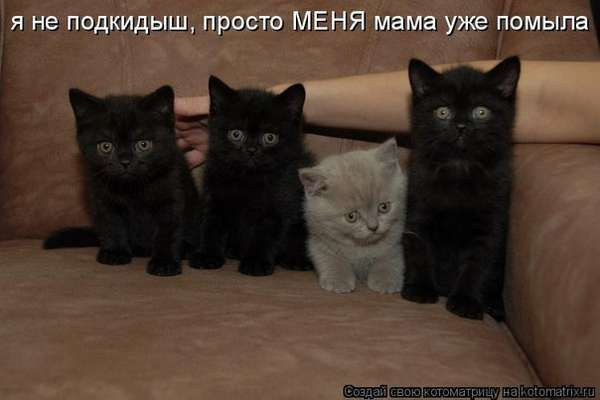 http://forumimage.ru/uploads/20150125/142218422350961636.jpg