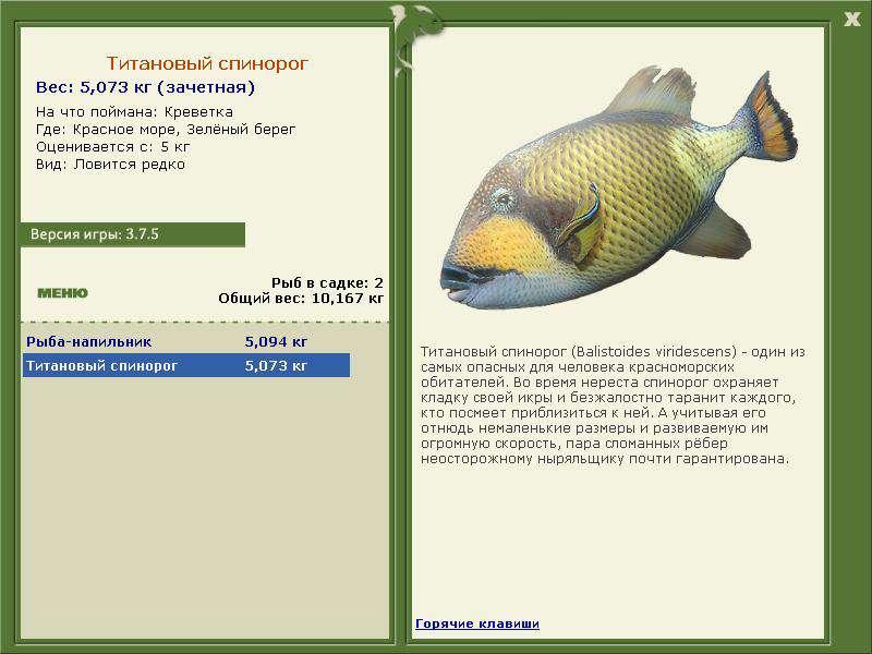 мобильная рыбалка для друзей где кого на что ловить
