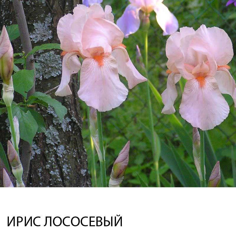 Просмотр темы - Северо-Восток Подмосковья и др. области в этом направлении