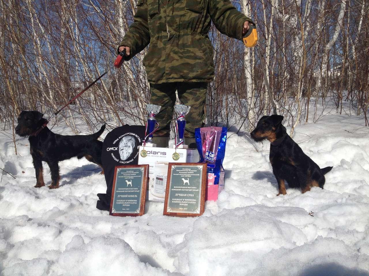 Монопородная выставка собак породы Немецкий Охотничий Терьер