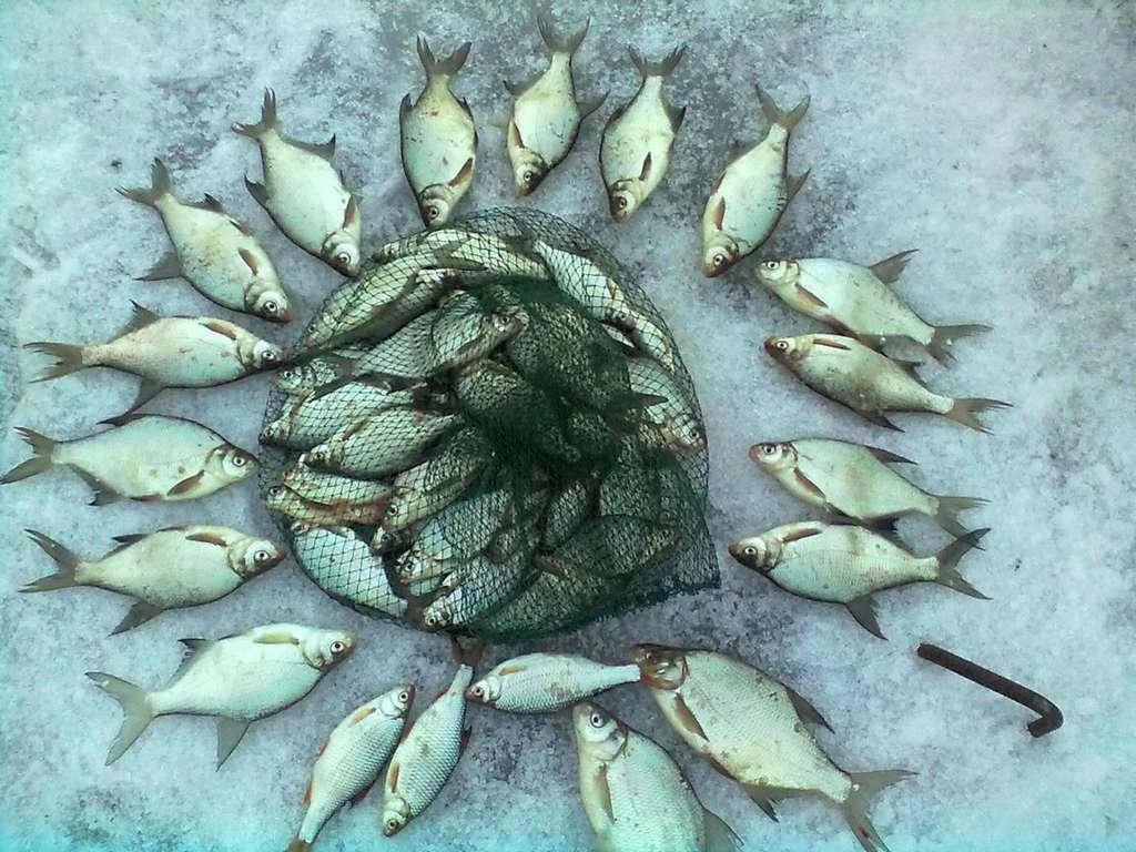 берег рыбалка