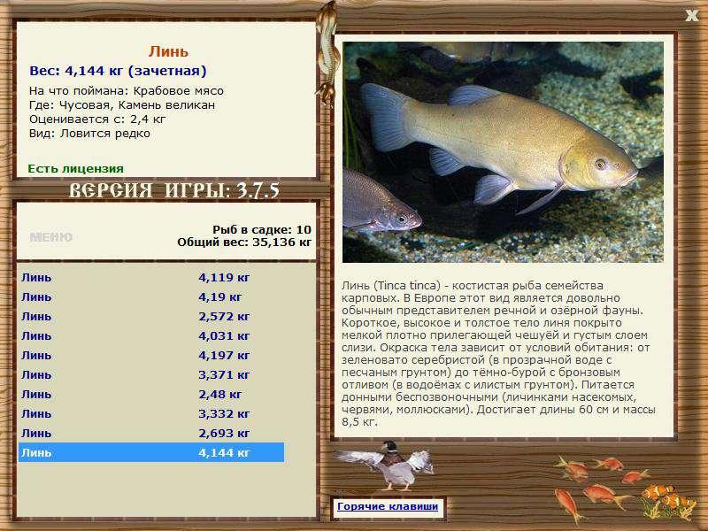 игры бесплатно рыбалка