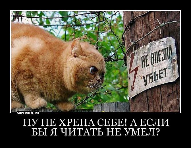 http://forumimage.ru/uploads/20150423/14297861986589381.jpg