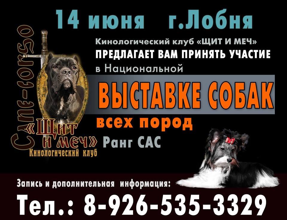 Выставки собак в Москве.
