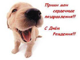 Поздравления собачника