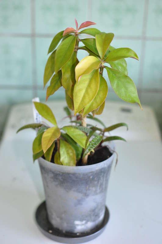 Dracaena  Great Indoor House Plants!