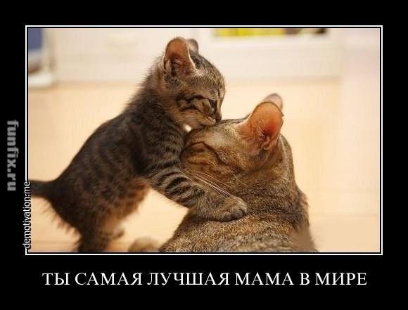 lyublyu-svoyu-mamu-v-ee-bolshoy-zad