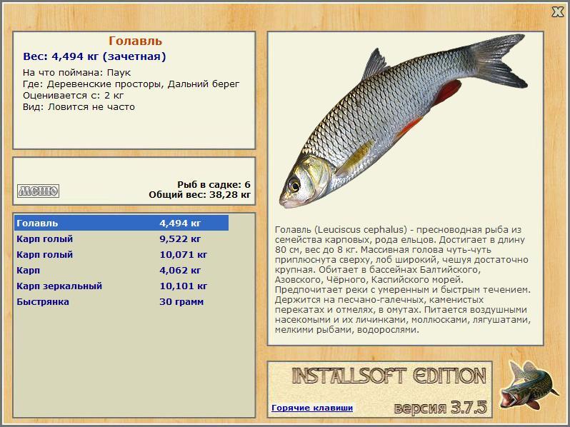 голавль рыба на что клюет таблица