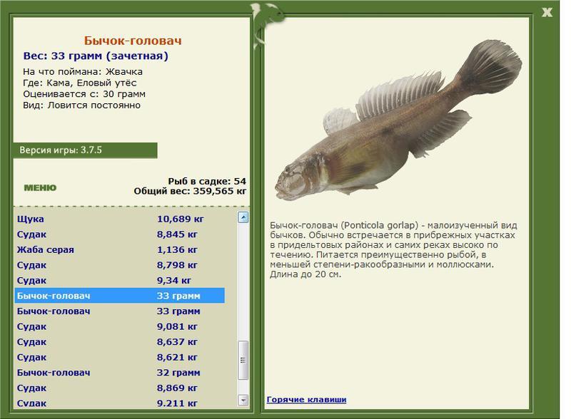 головач • Рыбы • РУССКАЯ РЫБАЛКА