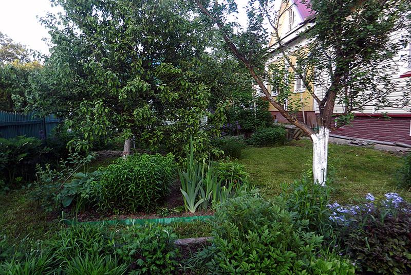 Дача сад цветы огород