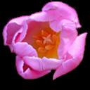 http://forumimage.ru/uploads/20151205/144935663507458745.png