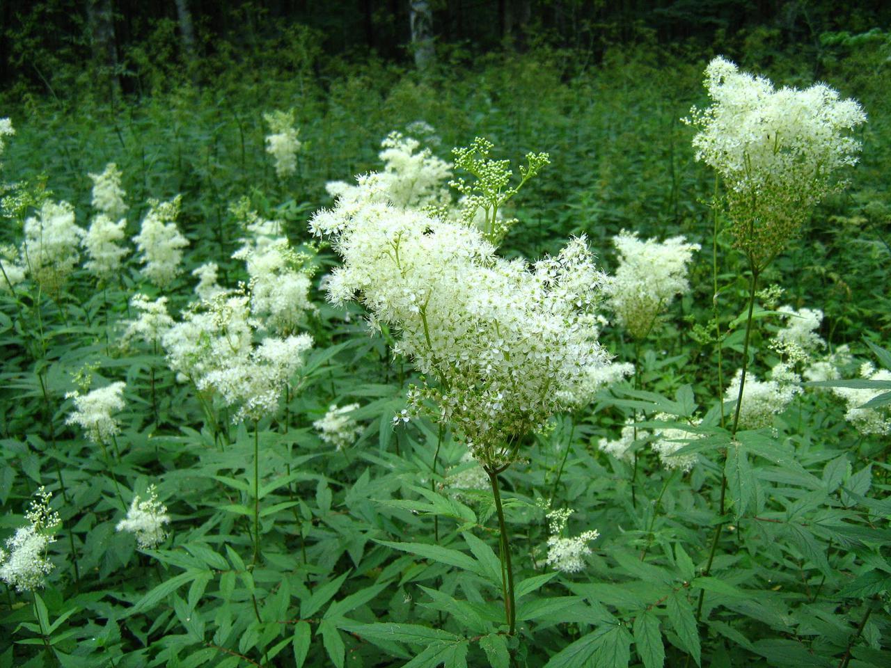 Растение содержащие анаболики анаболики вред или польза