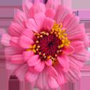 http://forumimage.ru/uploads/20151213/145004689432181682.png
