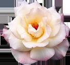 http://forumimage.ru/uploads/20151217/145038850425669561.png