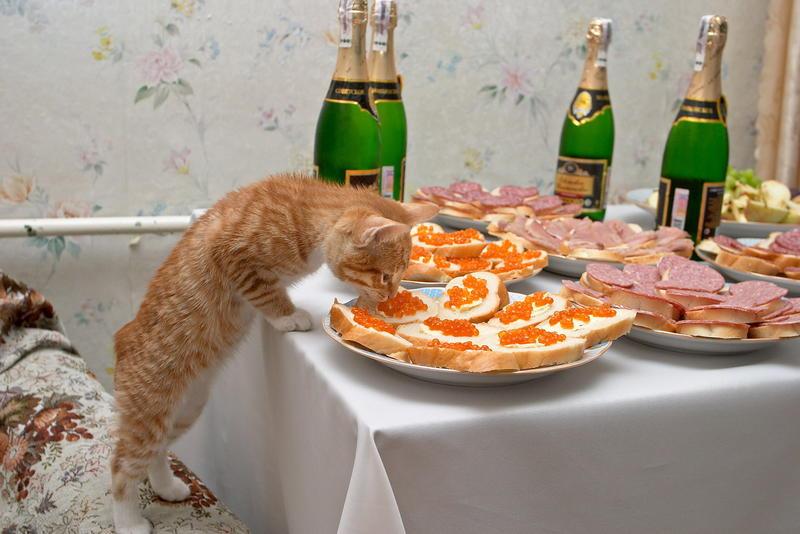 Поздравление на день рождения за столом