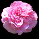 http://forumimage.ru/uploads/20160123/145357573079217570.png
