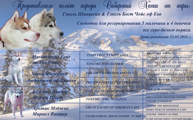 http://forumimage.ru/uploads/20160309/14575370518874772.jpg