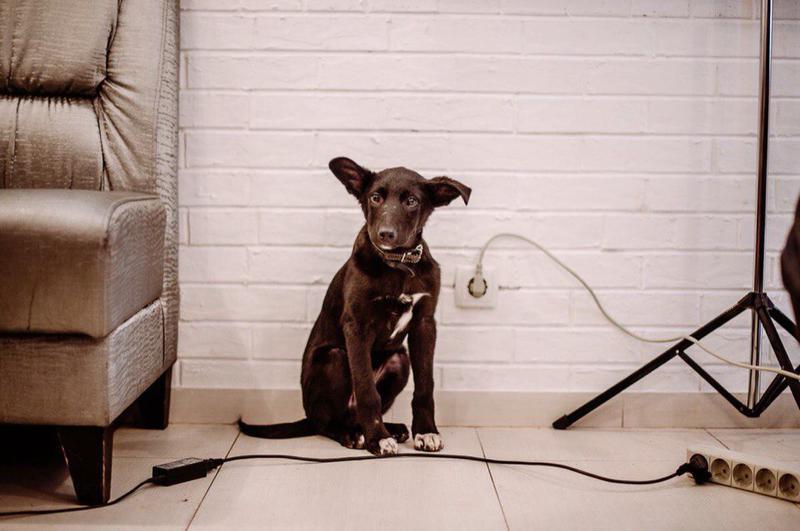 Греча - щенок с Шахтопроходки
