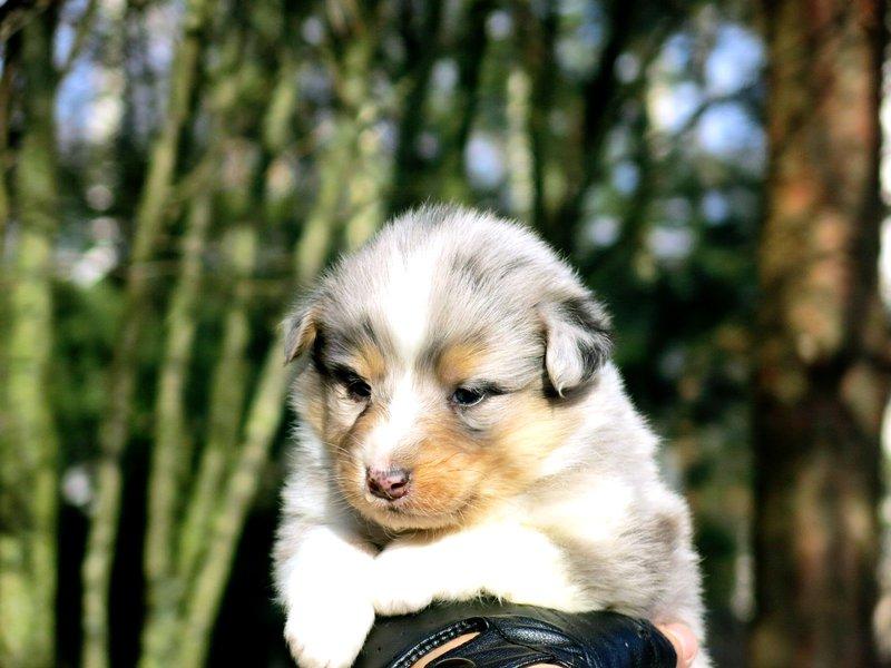 Собаки питомника скотчвуд - Страница 14 14599668536361241