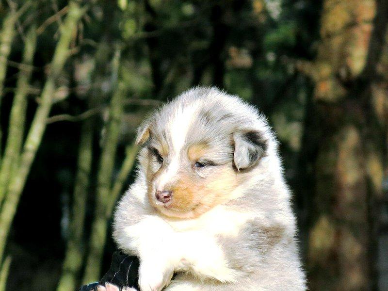 Собаки питомника скотчвуд - Страница 14 145996689558572584