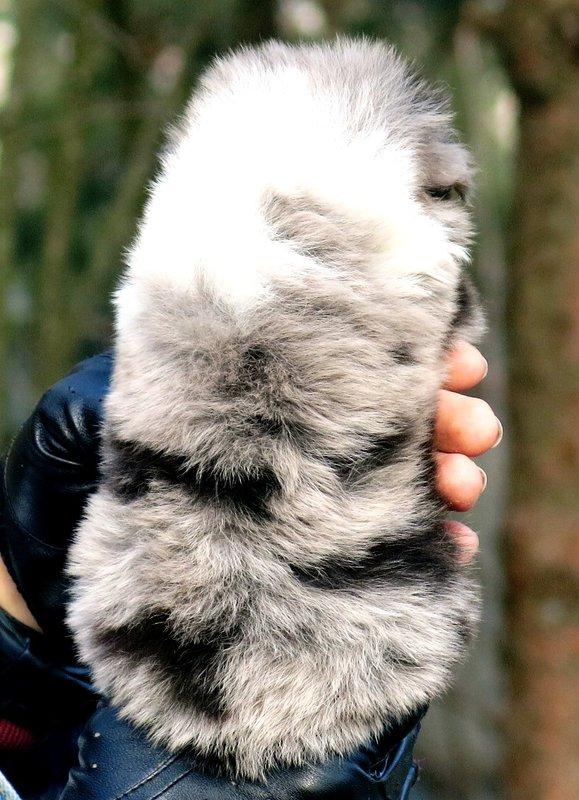 Собаки питомника скотчвуд - Страница 14 145996813333669097