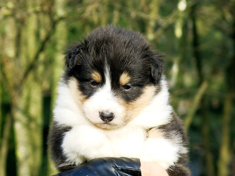 Собаки питомника скотчвуд - Страница 14 145996824937751481