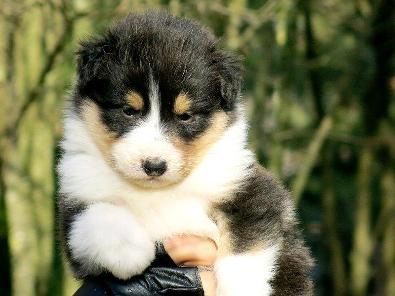Собаки питомника скотчвуд - Страница 14 145996826554415422