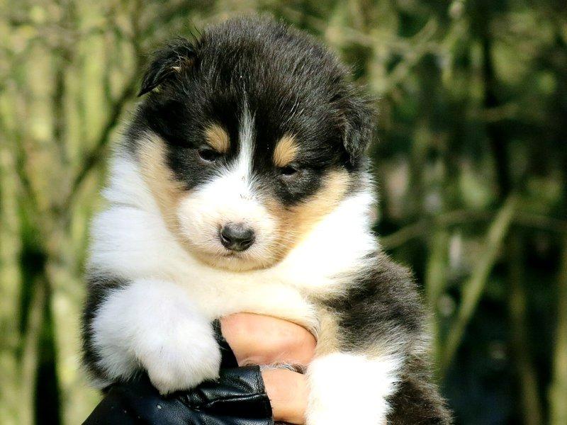 Собаки питомника скотчвуд - Страница 14 145996828281442443