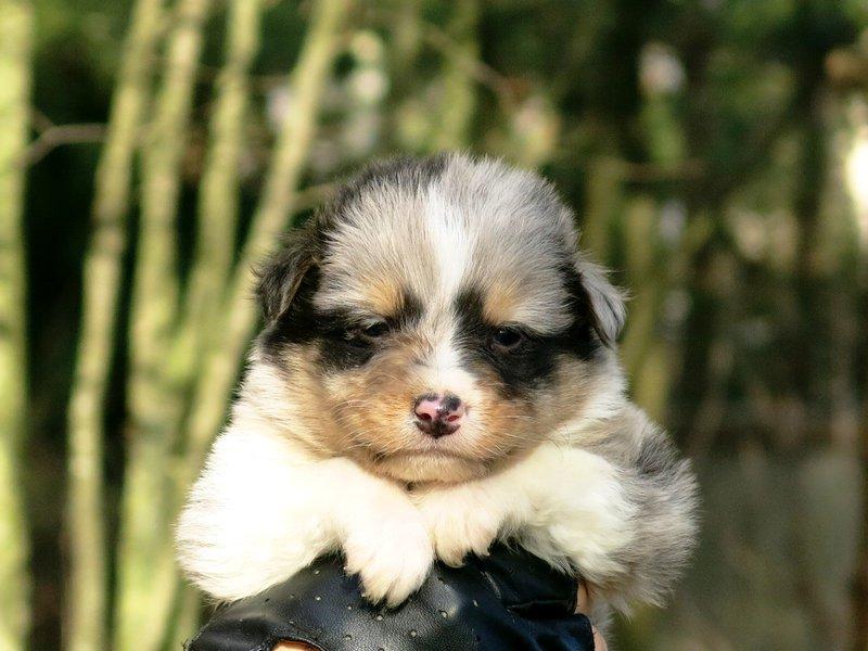 Собаки питомника скотчвуд - Страница 14 145996851715335078