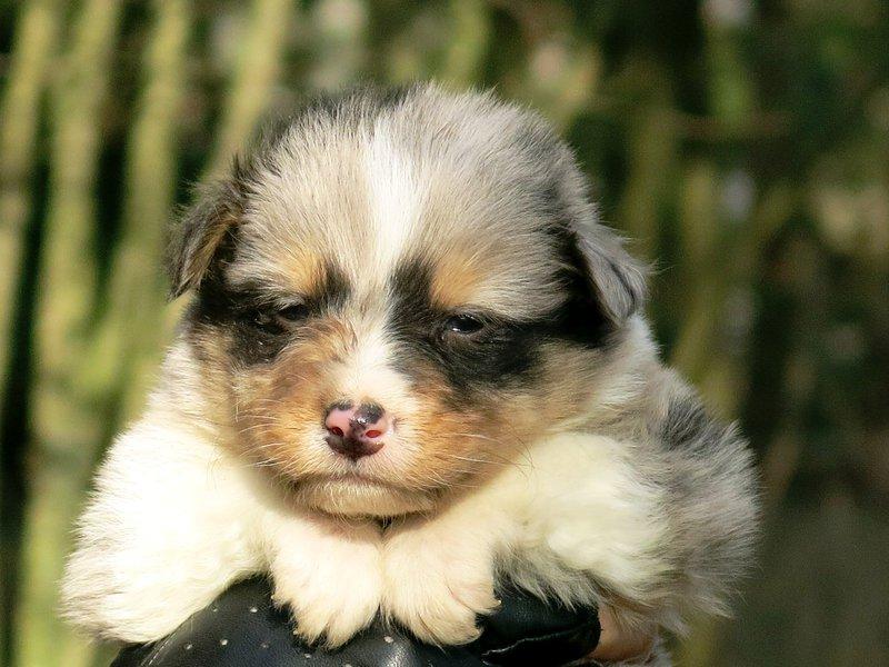 Собаки питомника скотчвуд - Страница 14 145996853366739984