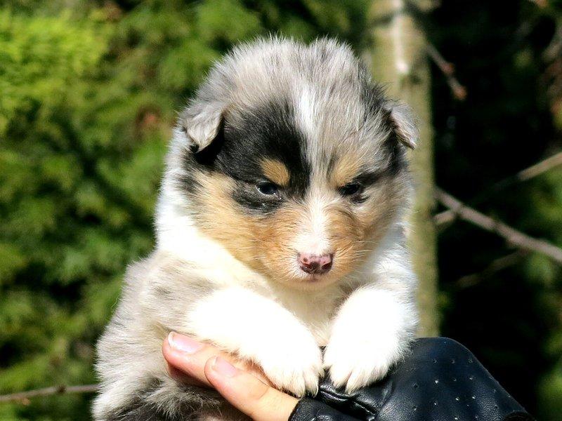 Собаки питомника скотчвуд - Страница 15 14614167199467256