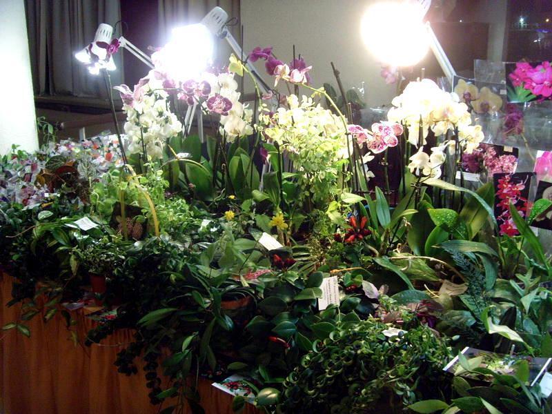 Фото выставки комнатных цветов