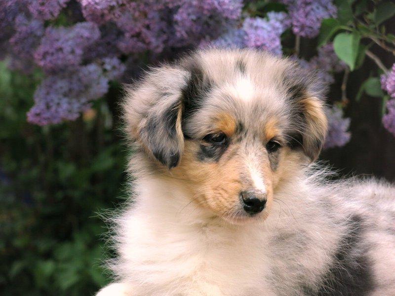 Собаки питомника скотчвуд - Страница 15 146392845848766661