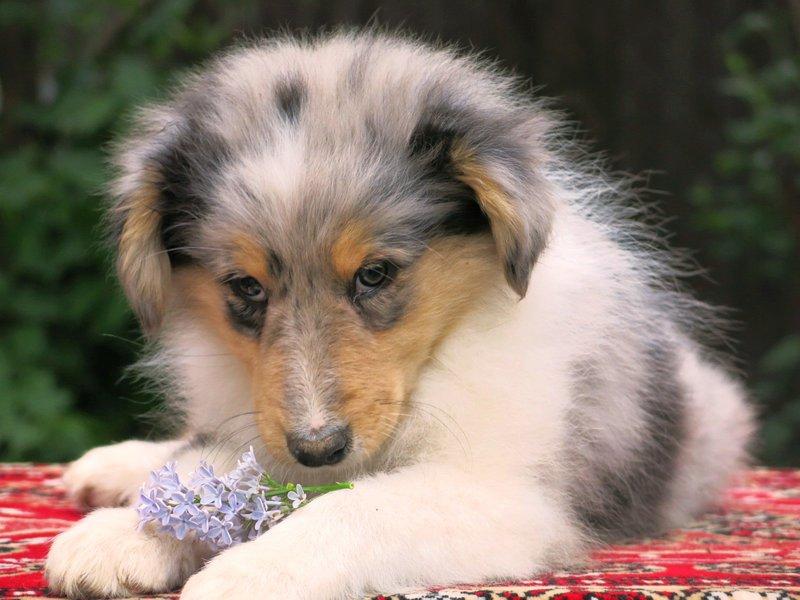 Собаки питомника скотчвуд - Страница 15 146392848721985241