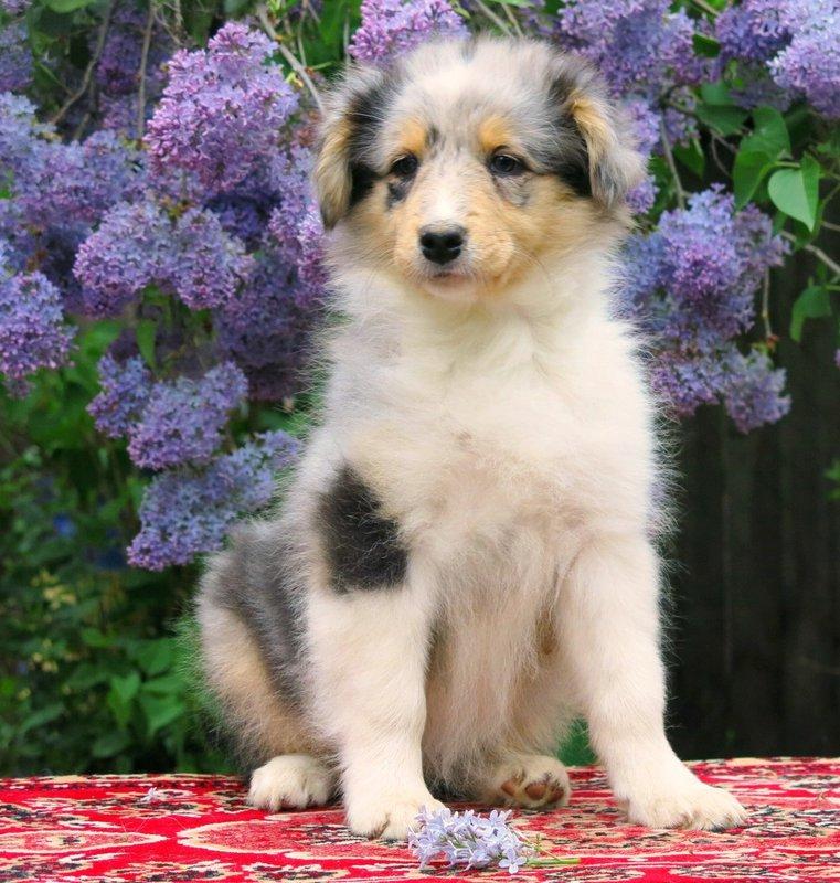Собаки питомника скотчвуд - Страница 15 146392935743649940