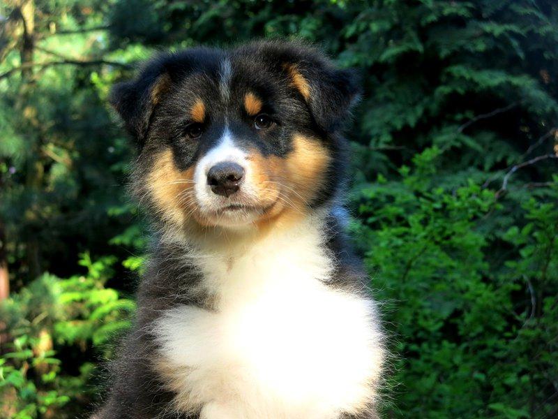 Собаки питомника скотчвуд - Страница 16 146401863303257027