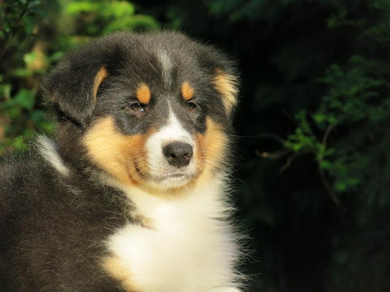 Собаки питомника скотчвуд - Страница 16 146401901382032198